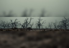 Creepy-Forest